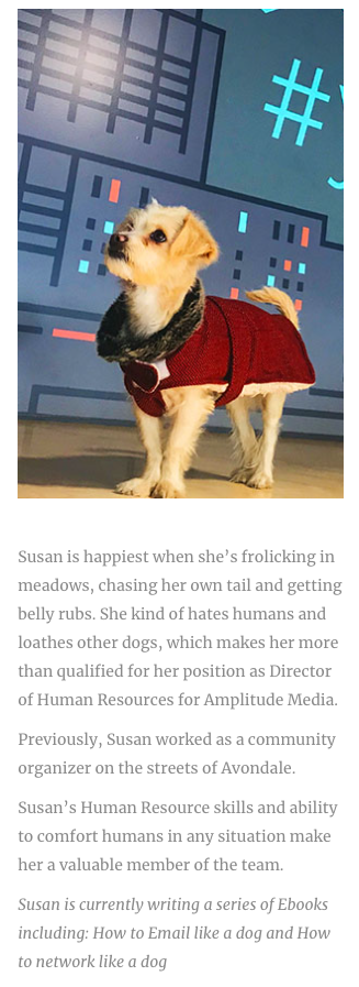 Image of a small dog with a bio that reads: Susan is happiest when she's frolicking in meadows, chasing her own tail and getting belly rubs. She kind of hates humans and loathes other dogs, which makes her more than qualified for her position as Director of Human Resources for Amplitude Media. Previously, Susan worked as a community organizer on the streets of Avondale. Susan's Human Resource skills and ability to comfort humans in any situation make her a valuable member of the team. Susan is currently writing a series of Ebooks including: How to Email like a dog and How to network like a dog